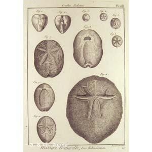 Encyclopédie méthodique, Bruguière, J.G., 1792. Plate 158. Ourfin, Echinus.