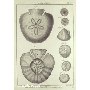 Encyclopédie méthodique, Bruguière, J.G., 1792. Plate 152. Ourfin, Echinus.