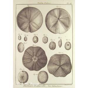 Encyclopédie méthodique, Bruguière, Echinus.J.G., 1792. Plate 143. Ourfin, Echinus.