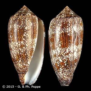 Cylinder textile textile f. archiepiscopus