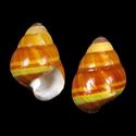 Achatinella abbreviata
