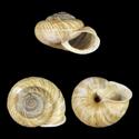 Canariella jandianensis