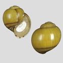 Pila gracilis