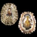 Collisella abrolhosensis