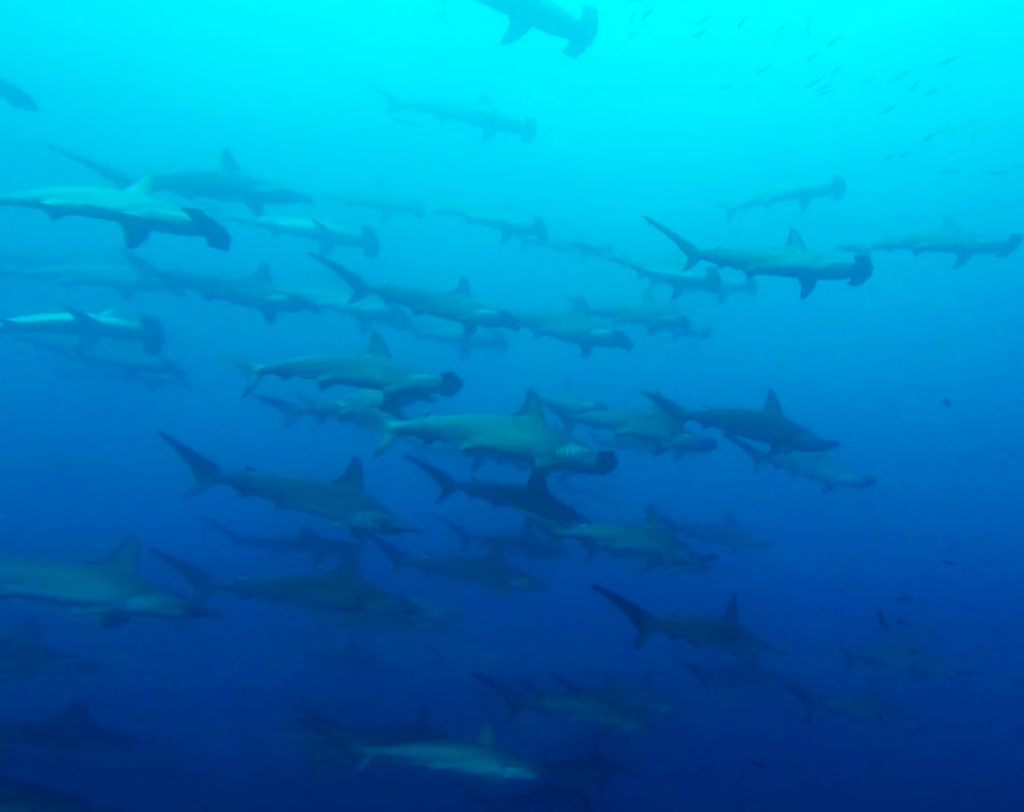 Darwin - Islas Galápagos