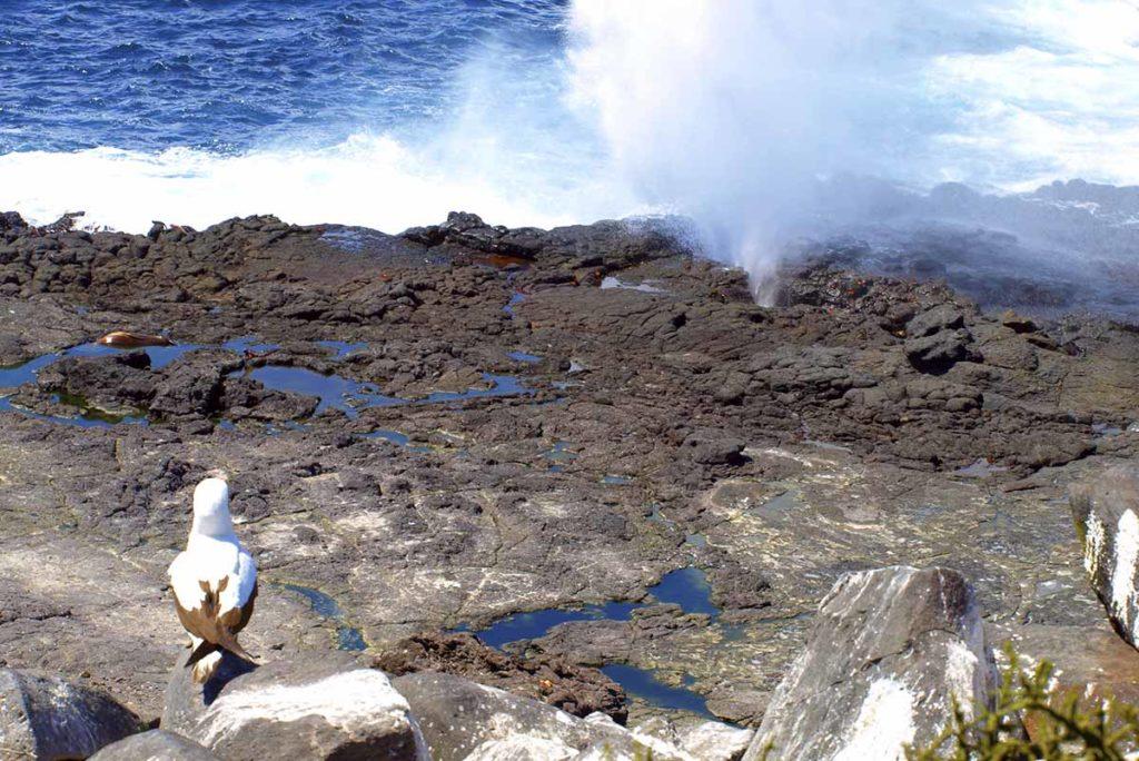 Expedición de Siete Días en Barco de Lujo por las Islas Occidentales - Islas Galápagos