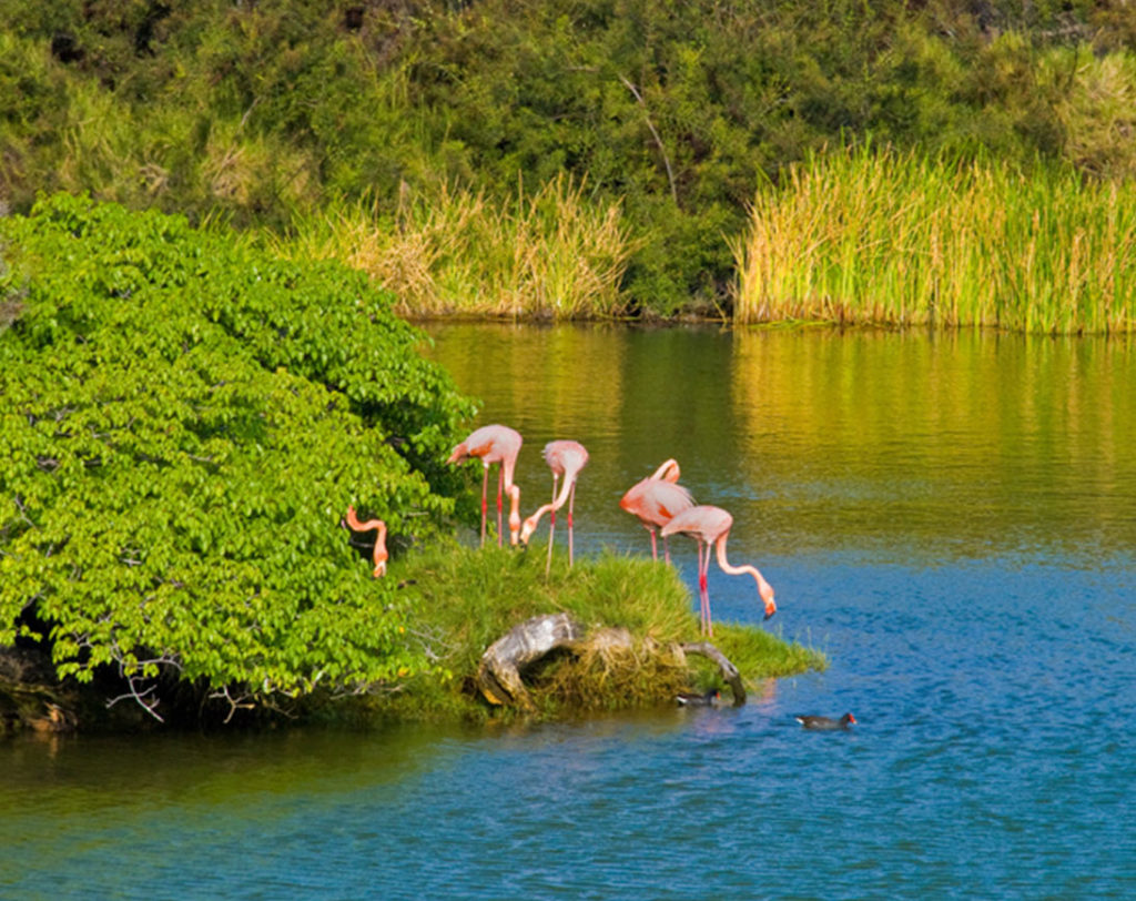 Florena - Islas Galápagos