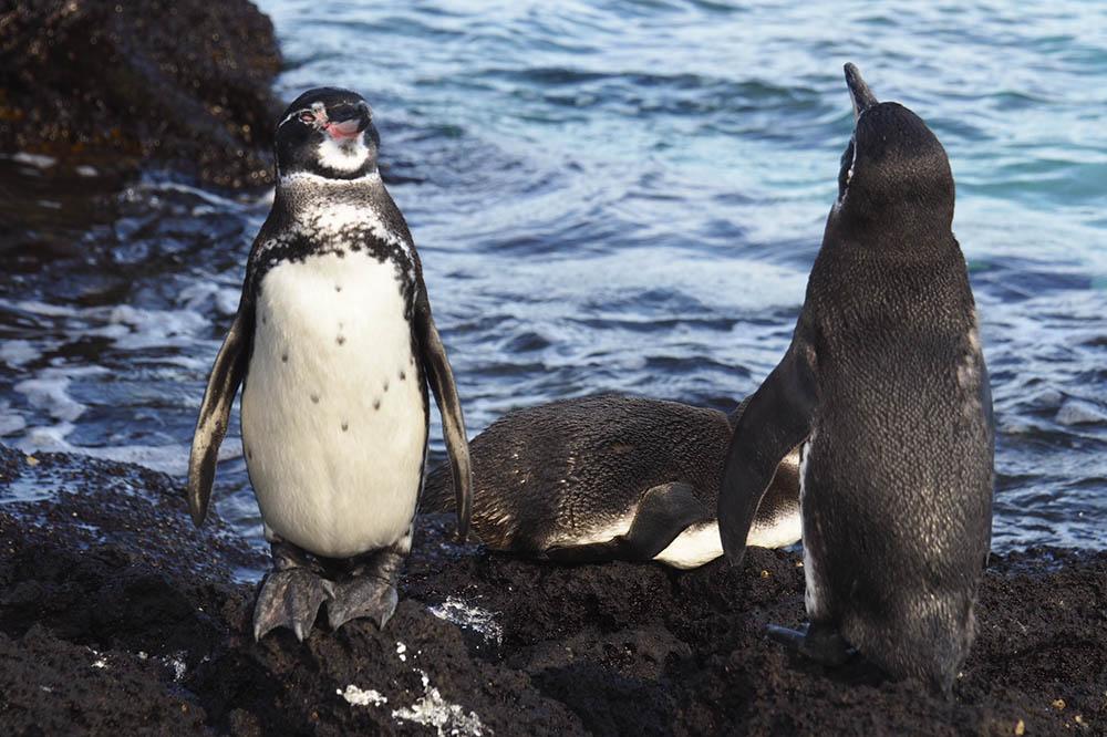 Descubrimiento 8 Días - Islas Galápagos