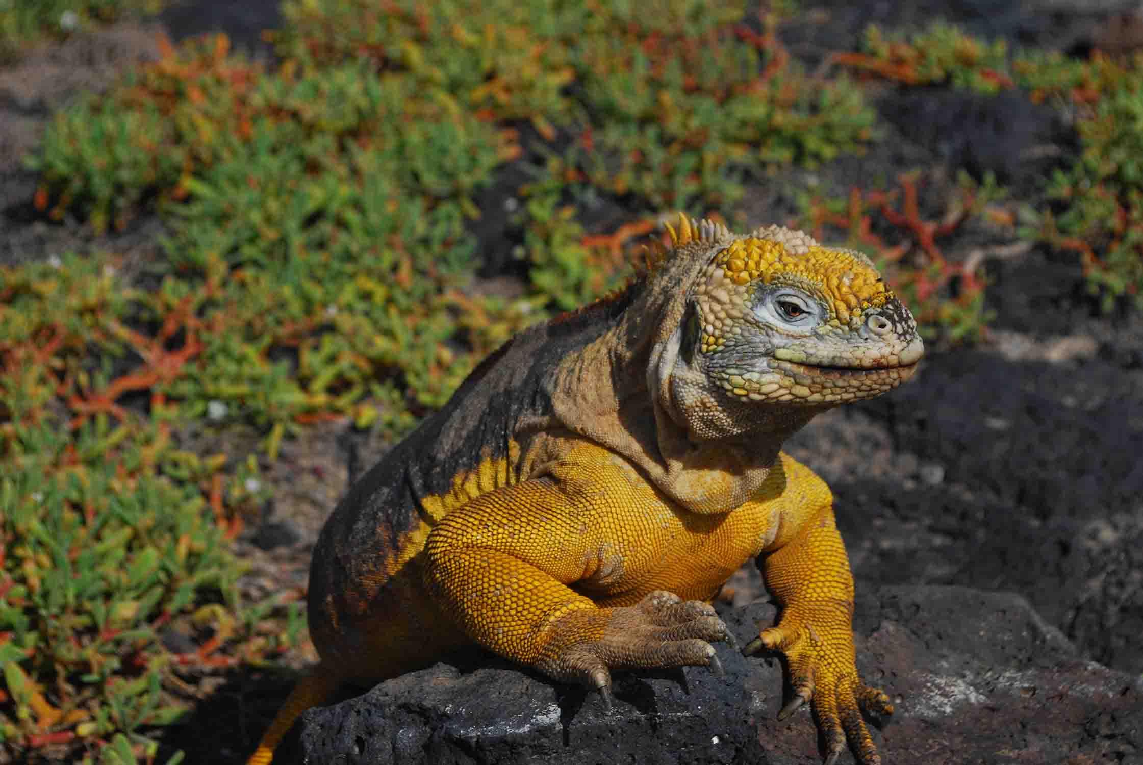 Descubrimiento - Islas Galápagos
