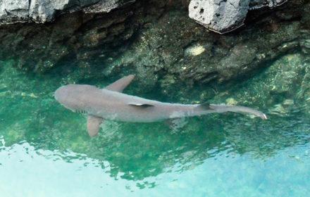 Itinerario B EcoGalaxy - Islas Galápagos