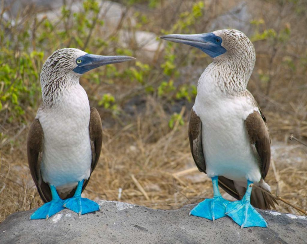 Isabela - Islas Galápagos