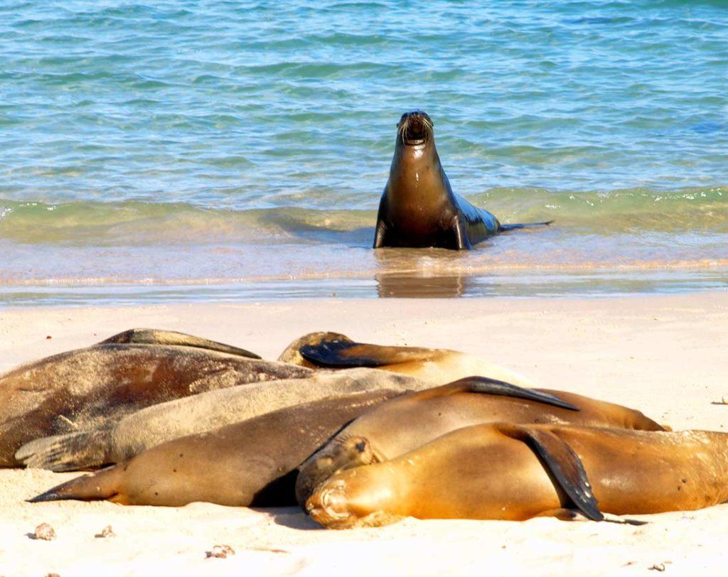 Santa Fe - Islas Galápagos
