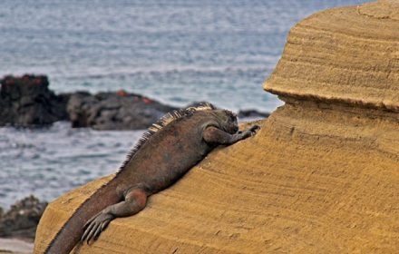 Itinerario D 6 Días - Islas Galápagos
