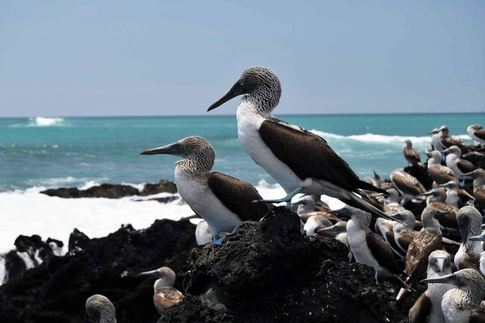 Norte 5 dias A - Islas Galápagos