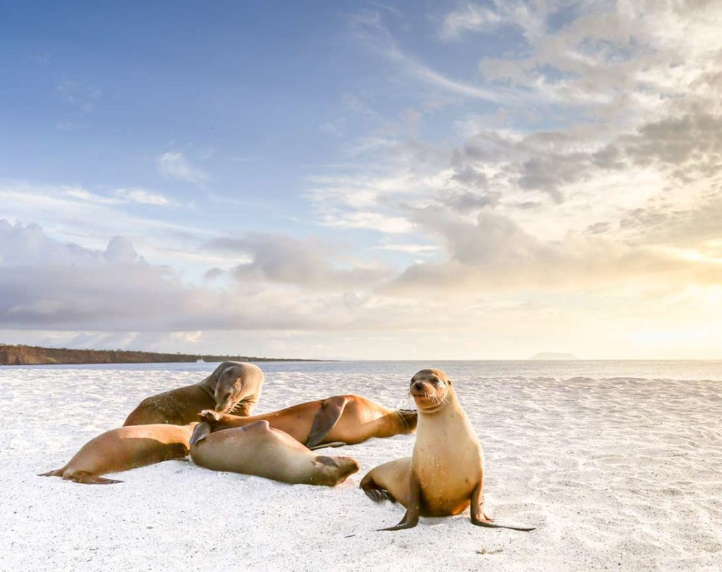 Mosquera - Islas Galápagos