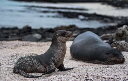 Itinerario Campana - Islas Galápagos
