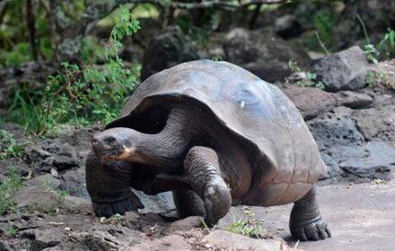 Itinerario D - Islas Galápagos