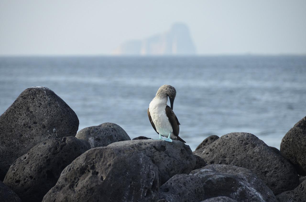 Buque de Lujo que Viaja del Centro a las Islas del Sur - Islas Galápagos