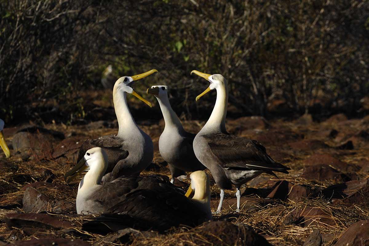 Itinerario B - Islas Galápagos
