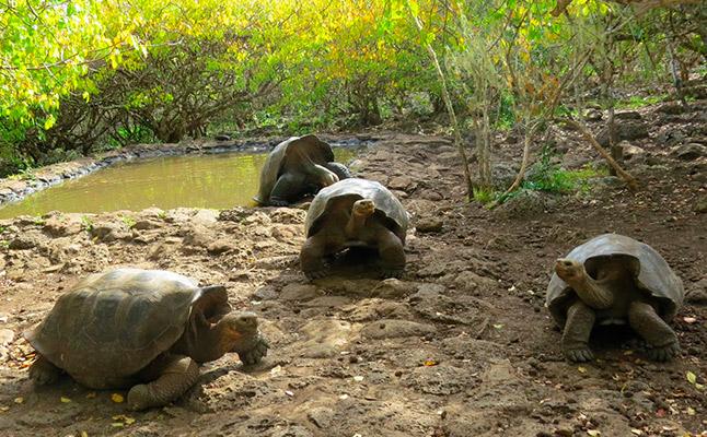 Explora Genovesa e islas Centrales en un Buque de Alta Gama - Islas Galápagos