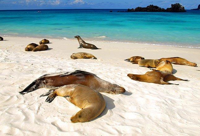 Itinerario C - Islas Galápagos
