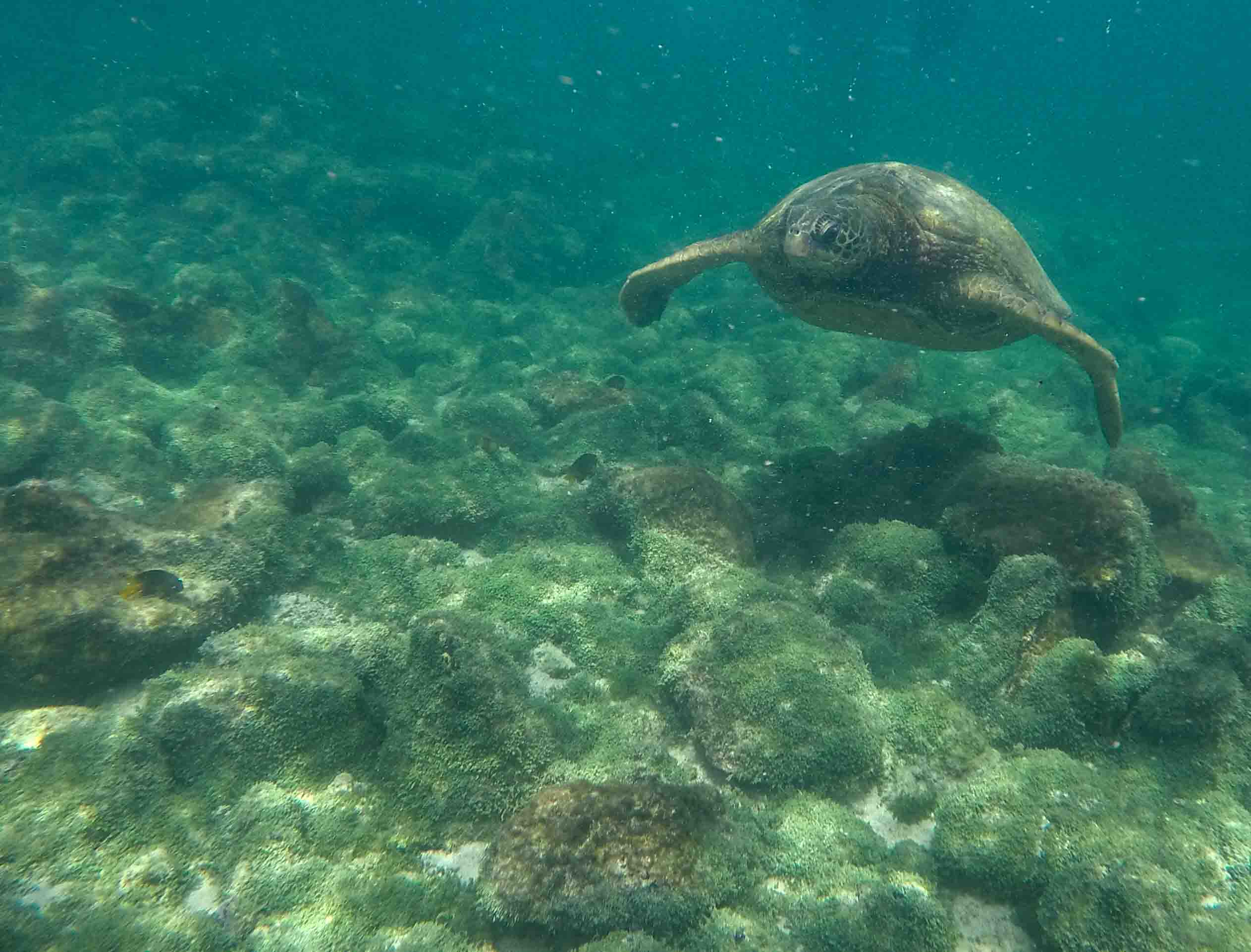 Darwin | Galapagos Islands | Galapagos Cruises