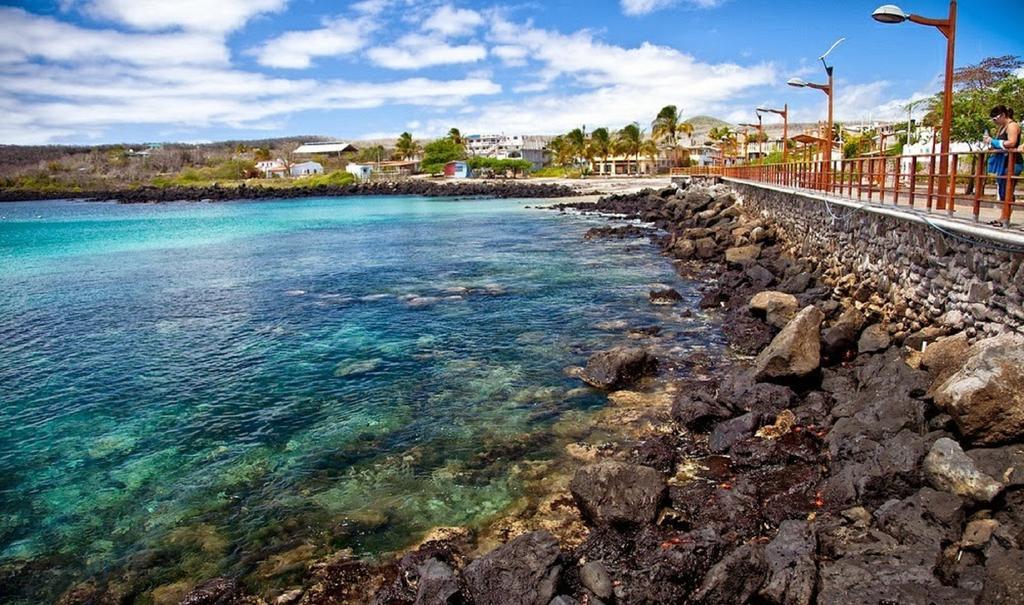 Miconia - Islas Galápagos