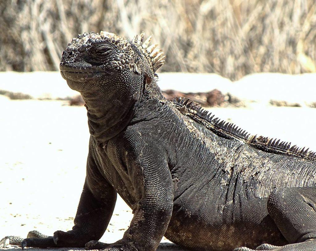 Baltra - Islas Galápagos