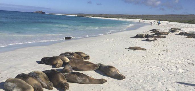 Itinerario de 8 Días - Islas Galápagos
