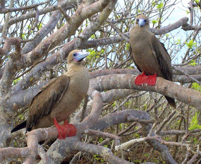 Crucero de lujo por las islas del norte y oeste - Islas Galápagos