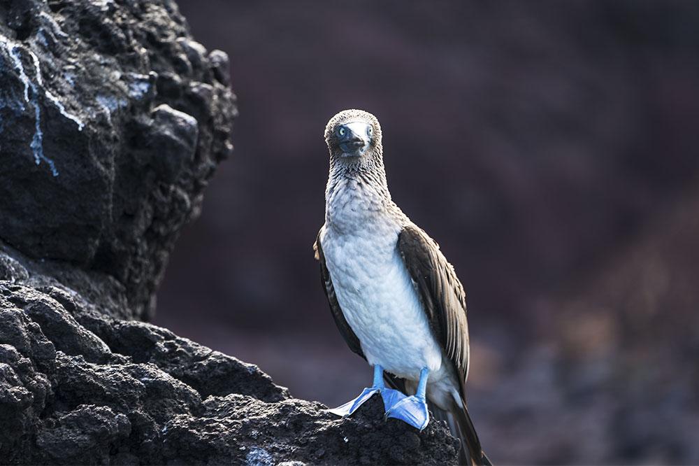 Itinerario A5 - Islas Galápagos