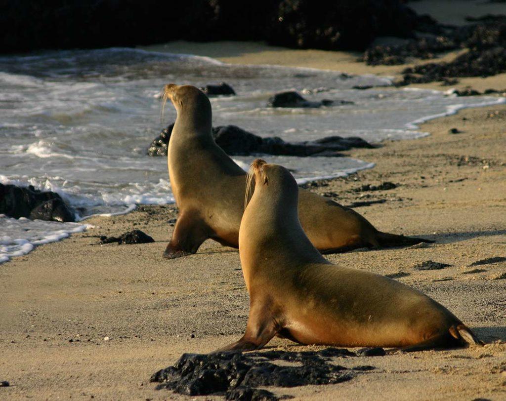 Marchena - Islas Galápagos