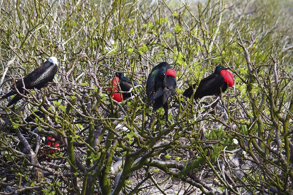 Itinerario por el Centro y Norte de las islas en el yate Bonita - Islas Galápagos