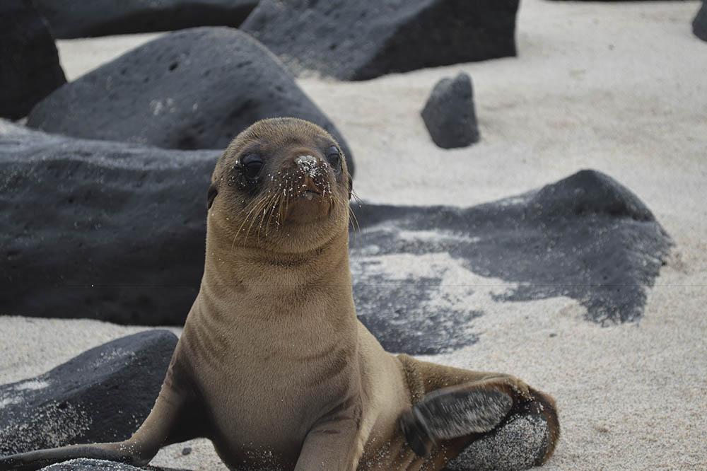 Itinerario por el Centro y Sur de las Islas en el yate Bonita - Islas Galápagos