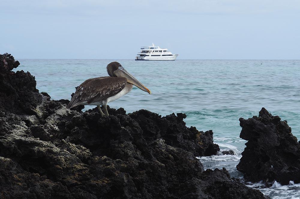 Aventura en crucero por las islas norte y centrales de Galápagos - Islas Galápagos