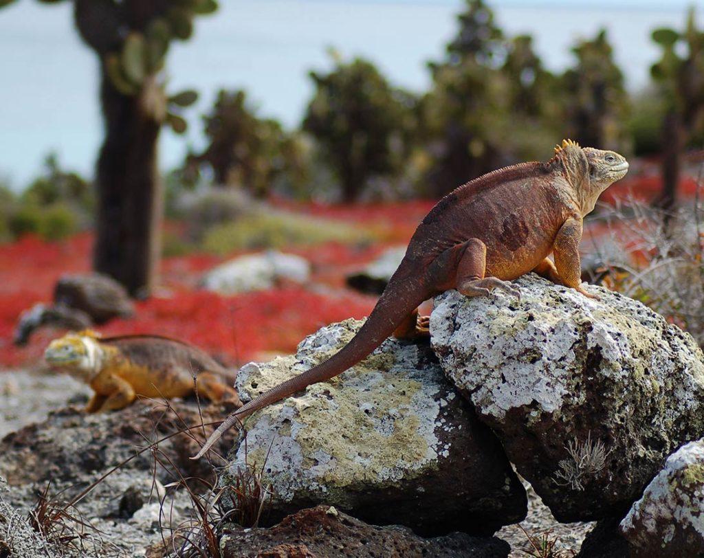 Viaje en crucero de lujo por las islas centrales y del sur - Islas Galápagos
