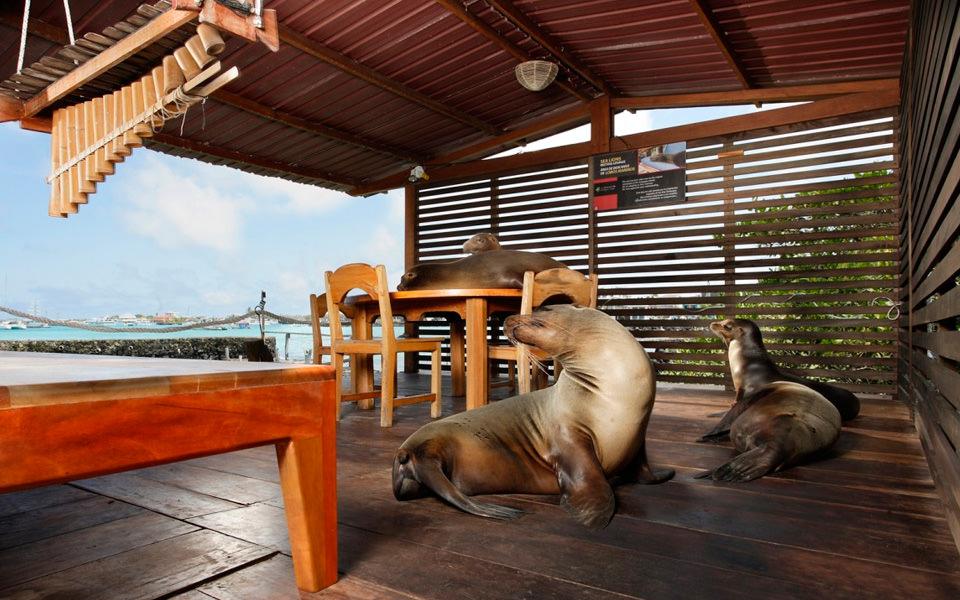 Red Mangrove - Islas Galápagos
