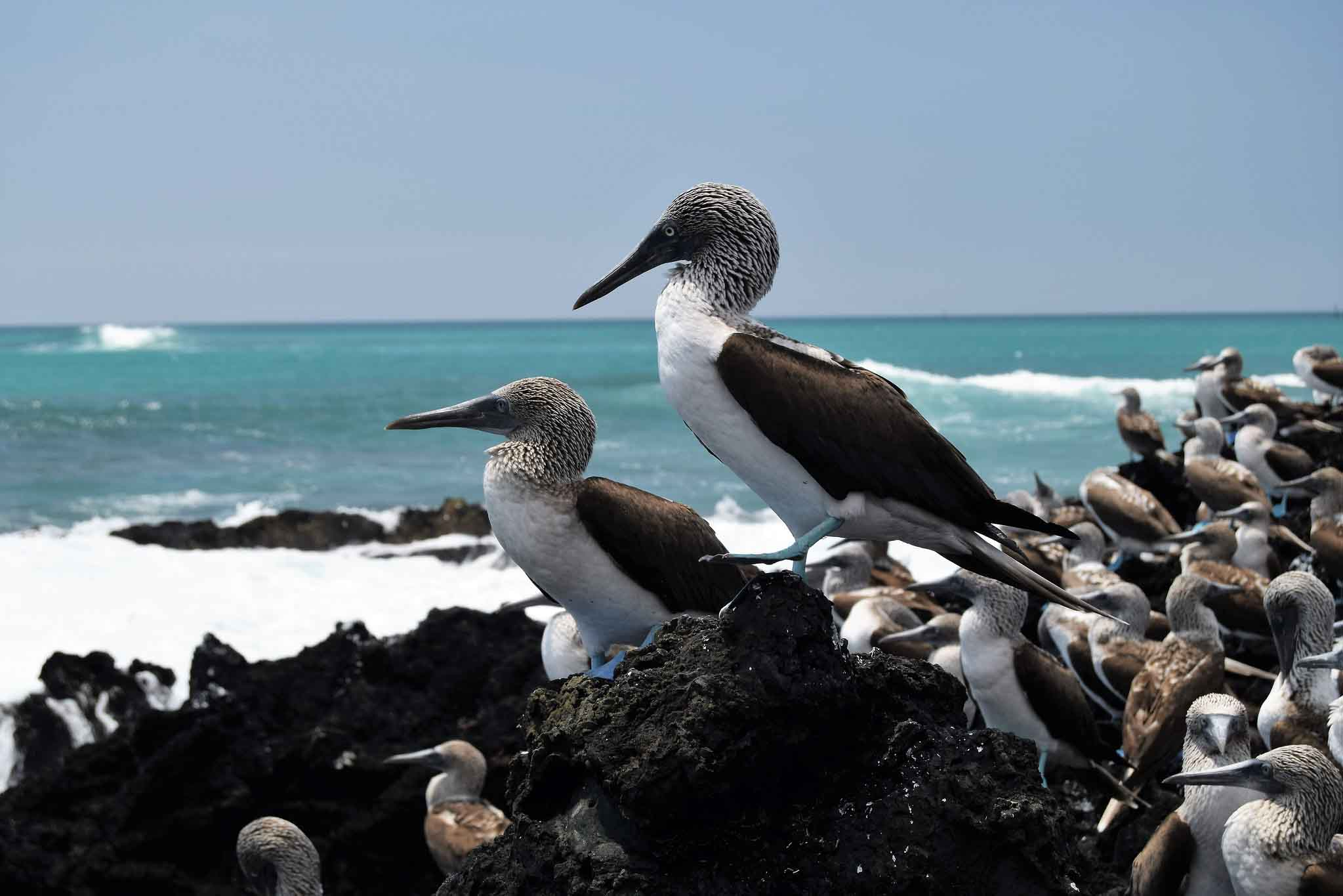 undefined | Galapagos islands