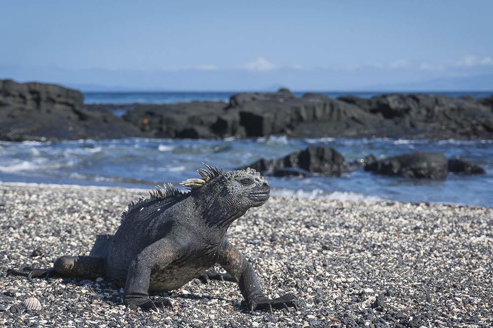Enchanted Luxury East and West Galapagos Islands Cruise