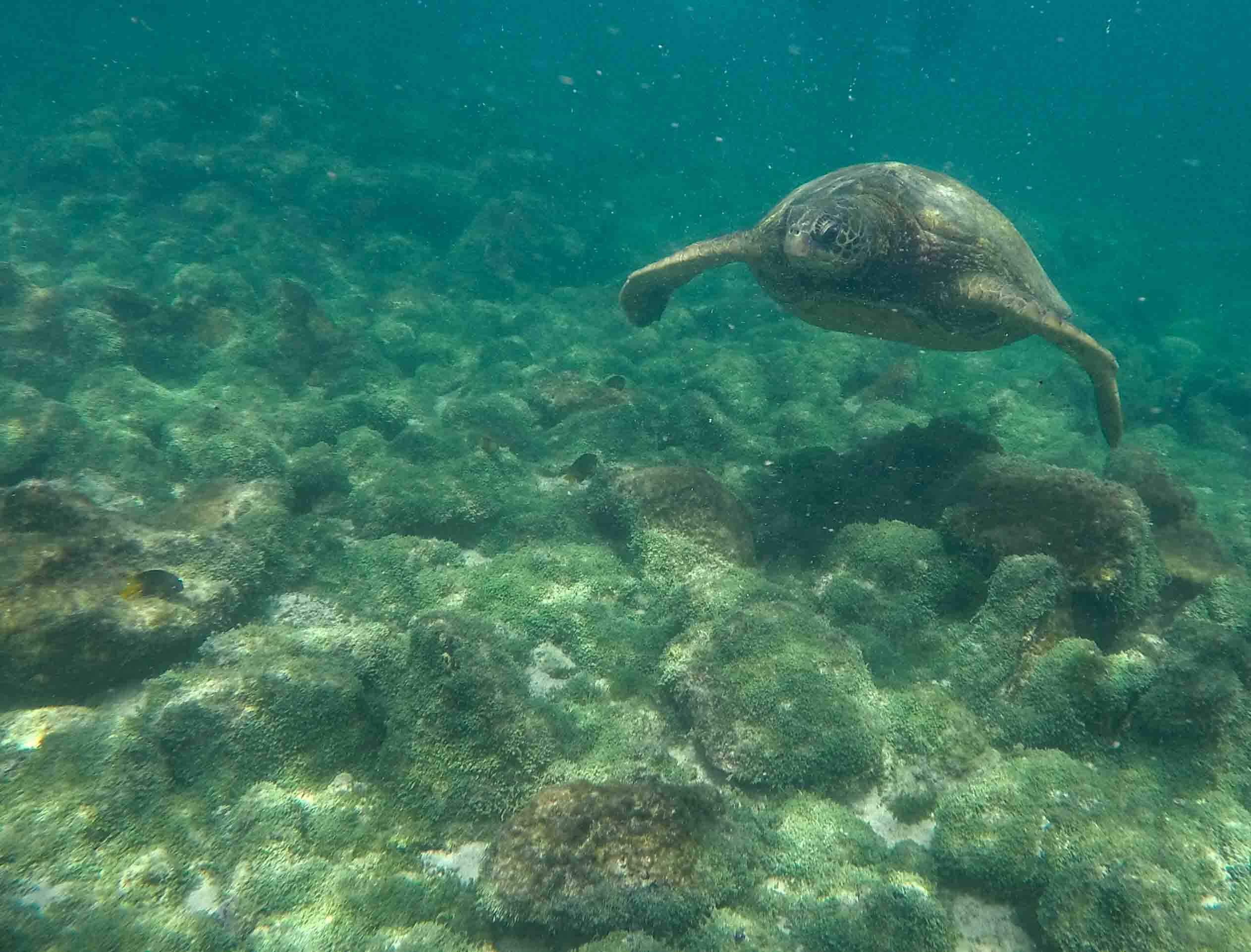 Aventura 5 Días - Islas Galápagos