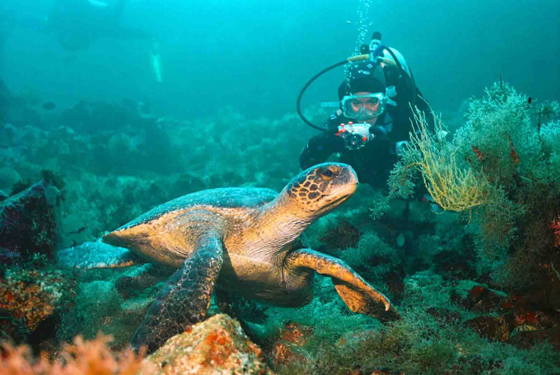 Galapagos is now open