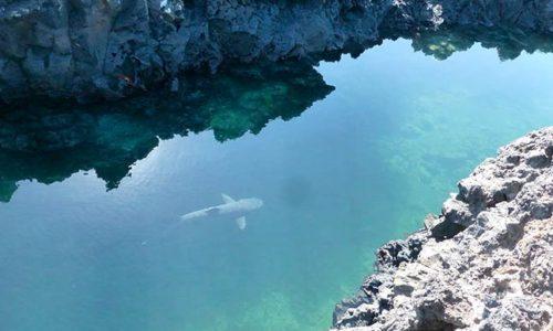 8 dias islas del este y oeste - Islas Galápagos
