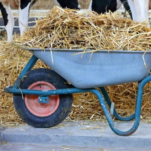 Wheelbarrow with Hay