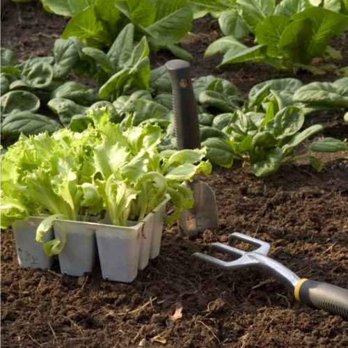 Vegetable Garden- We Have the plants you need for a beautiful garden.