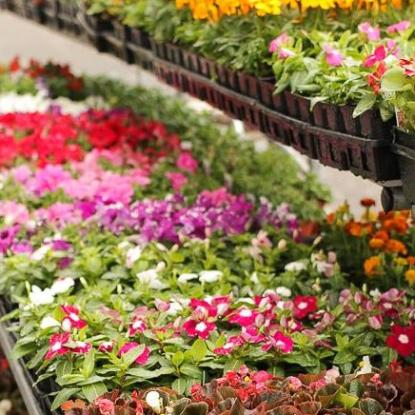 garden center, sunwest true value, flowers, herbs, vegetables, annuals, perennials, baskets, mulch, soil, fertilizer, garden center.