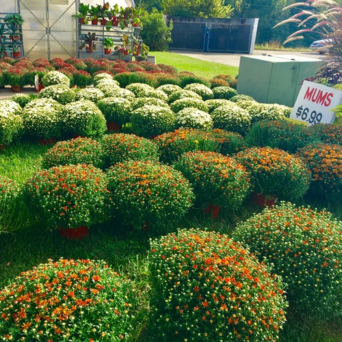 Seasonal Plants, Flowers, and Vegetables.