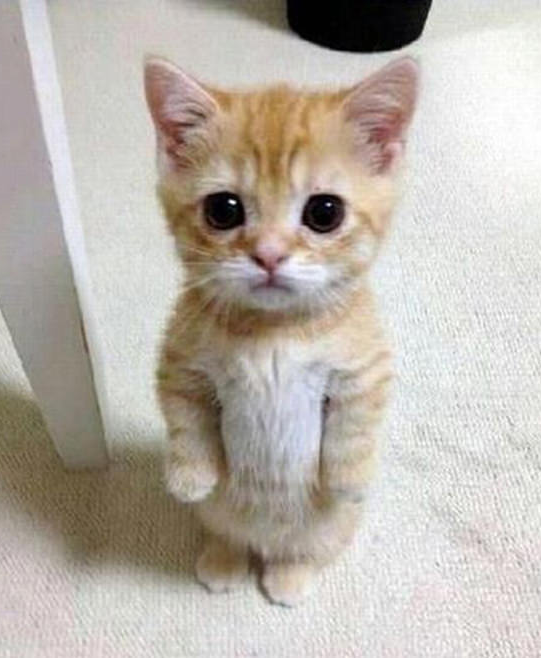Super Cute Kitten