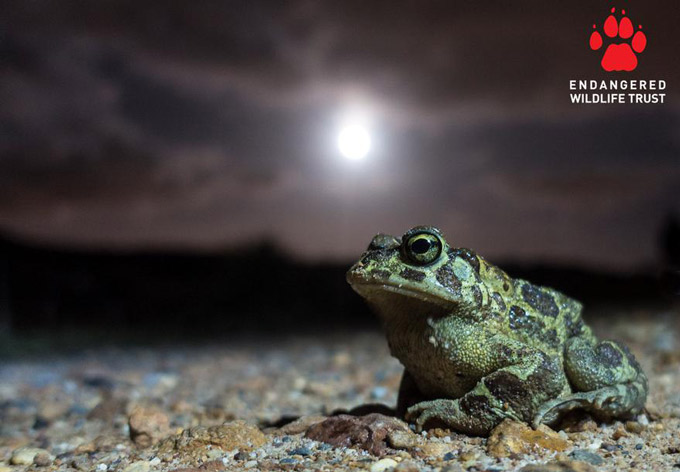 Ford Wildlife Foundation Organisations Join Forces to Support Two Different Species