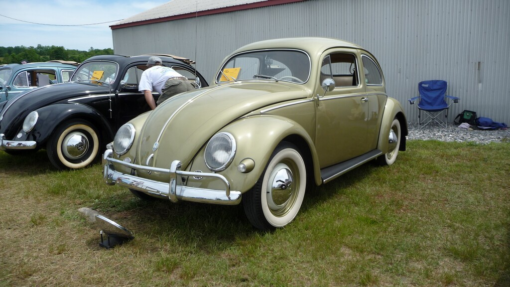 Litchfield Bug In