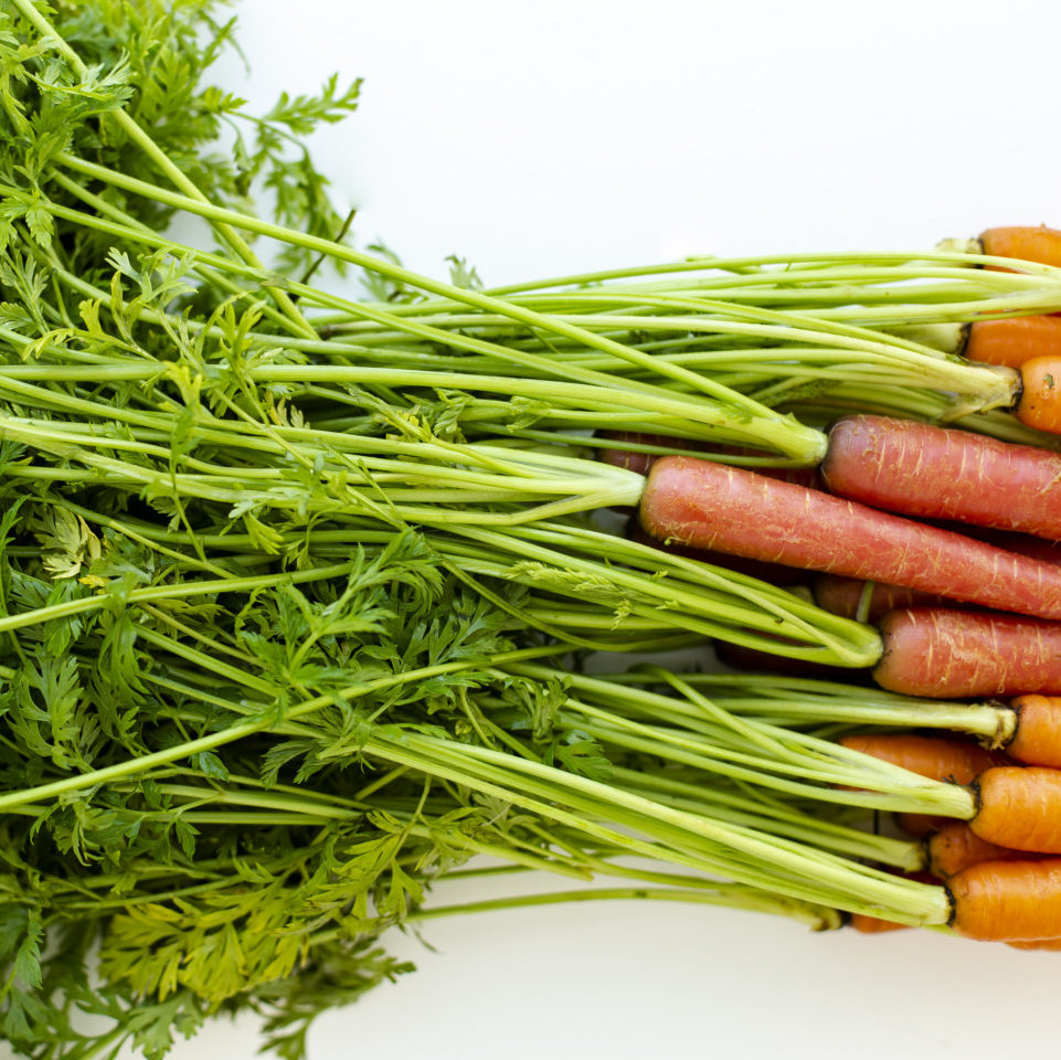 A close-up photo of the long carrot tops of about a dozen carrots.